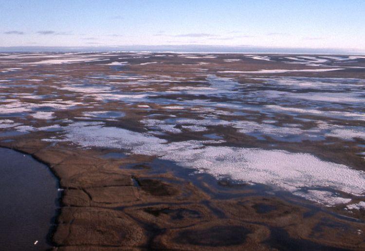 Clima, caldo record a maggio in Siberia