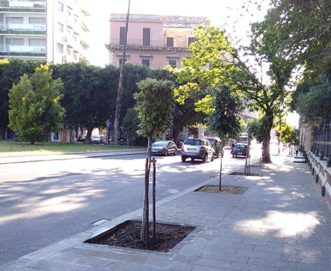 A Catania progetto 2mila nuovi alberi, già messi a dimora 250 arbusti