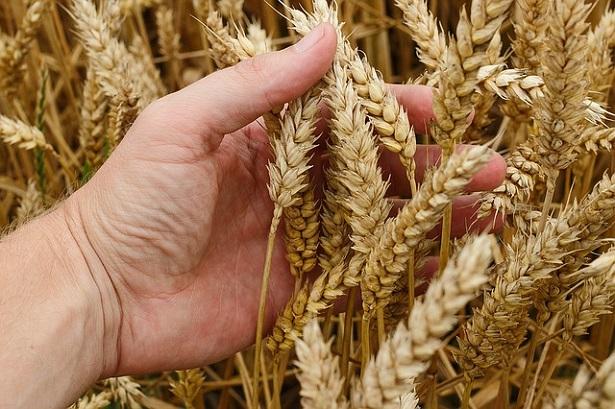 Come diventare agronomo