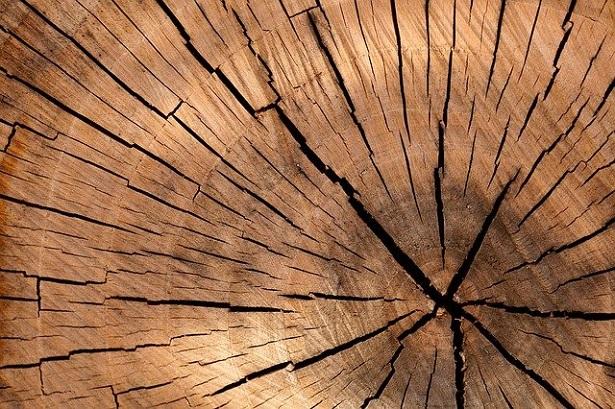 Legno duro e legno tenero