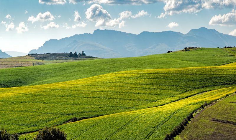 Agricoltura, nel 2020 prezzo terreni stazionario e compravendite -8,4% Agenzia di stampa Italpress